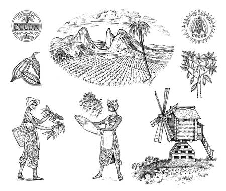 Illustration for Cocoa or coffee plantation. Vintage farm and landscape with mountains, women harvest, windmill for label logo badge badges. Engraved hand drawn sketch. vector illustration. - Royalty Free Image