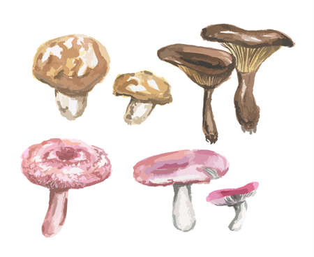 Watercolor mushrooms set. Mushrooms on white background. Autumn and fall meal.
