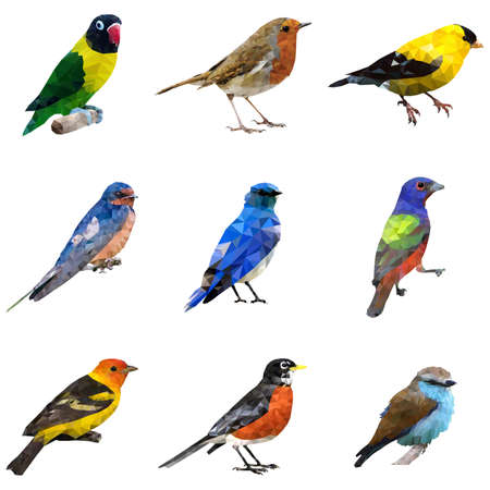 A vector illustration of different type of birds