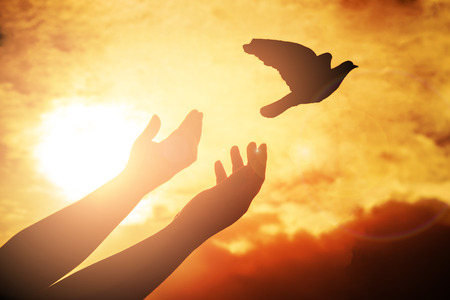 Photo for Man praying and free bird enjoying nature on sunset background, Human raising hands. Worship christian or freedom concept background. silhouette pigeon flying out of two hand and freedom concept and international day of peace. - Royalty Free Image