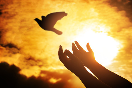 Photo for Man praying and free bird enjoying nature on sunset, Human raising hands. Worship christian religion. silhouette pigeon flying out of two hand and freedom concept and international day of peace. - Royalty Free Image