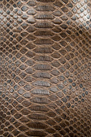 brown crocodile texture