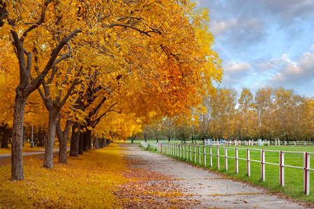 Foto de Autumn in a park - Imagen libre de derechos