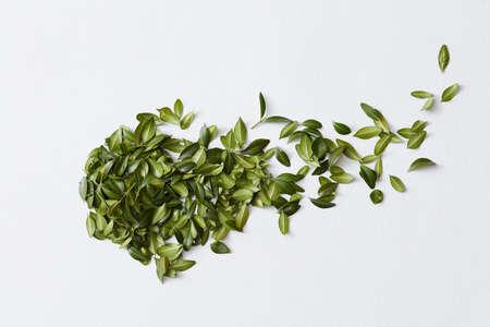 Photo pour Green leaves and white background - image libre de droit