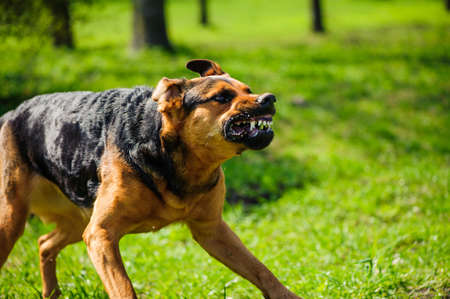 Photo pour angry dog with bared teeth - image libre de droit