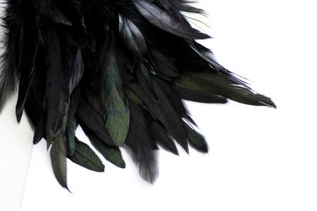 Foto de Feather Background - Imagen libre de derechos