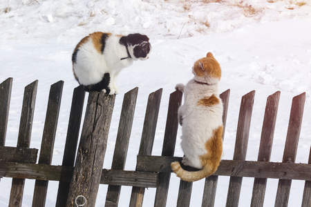 Foto de Two cats sit on an old fence. Clarification of relations. Spring, love - Imagen libre de derechos
