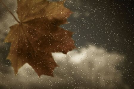 Maple leaf and raindrops on window. Autumn background.