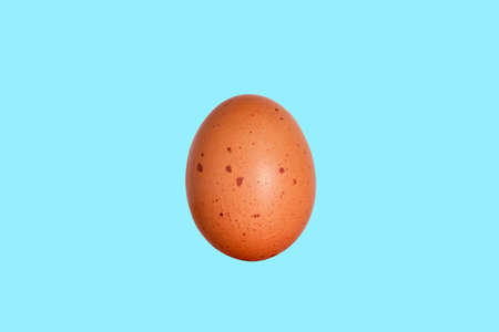 Egg brown with stains moles on a blue background 2019