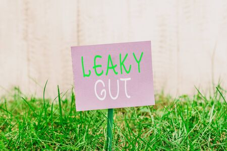 Photo for Writing note showing Leaky Gut. Business concept for A condition in which the lining of small intestine is damaged Plain paper attached to stick and placed in the grassy land - Royalty Free Image