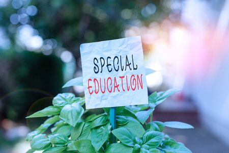 Foto de Word writing text Special Education. Business photo showcasing form of learning given to students with mental challenges Plain empty paper attached to a stick and placed in the green leafy plants - Imagen libre de derechos