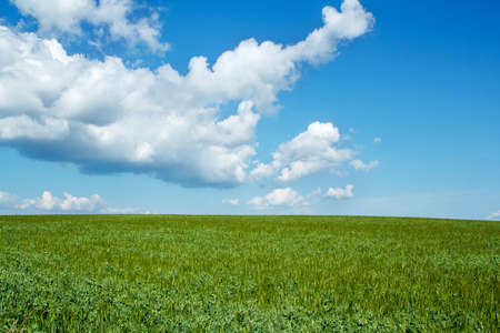 Photo pour Beautiful summer rural landscape with green field and blue sky - image libre de droit