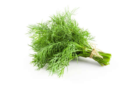 Photo for Fresh green dill isolated. Food ingredients. Healthy food - Royalty Free Image