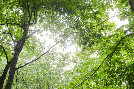 Photo for Green forest with sun rays. Nature background - Royalty Free Image