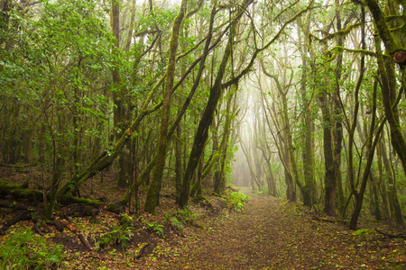 Photo for Garajonay national park, La-Gomera, Canary Islands, Spain - Royalty Free Image