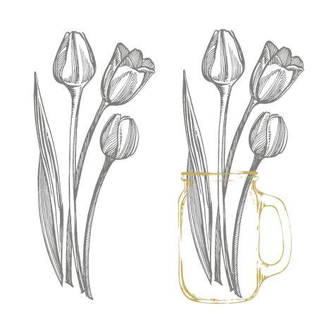 Illustration for Tulip flower graphic sketch illustration. Botanical plant illustration. Vintage medicinal herbs sketch set of ink hand drawn medical herbs and plants sketch - Royalty Free Image