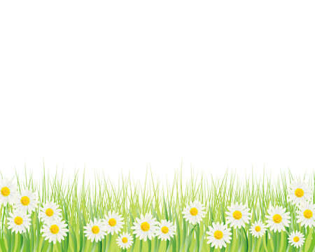 white daisy background