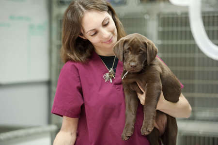a veterinary assistant holds a young patient