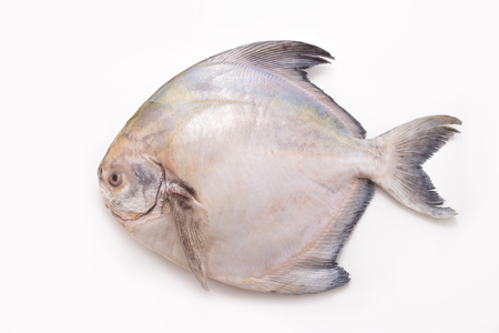 Foto de White Pomfret isolated on white backgrond - Imagen libre de derechos
