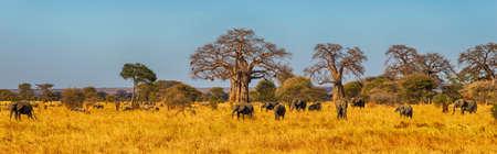 Foto de Elephant Herd walking in the Serengeti, Tanzania - Imagen libre de derechos