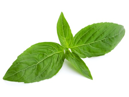Photo pour Basil isolated on white background  - image libre de droit