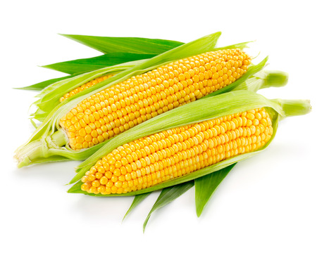 Foto de An ear of corn isolated on a white background   - Imagen libre de derechos