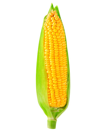 Foto de single an ear of corn isolated - Imagen libre de derechos