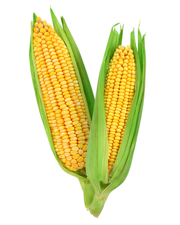 Foto de Corn isolated on a white background - Imagen libre de derechos