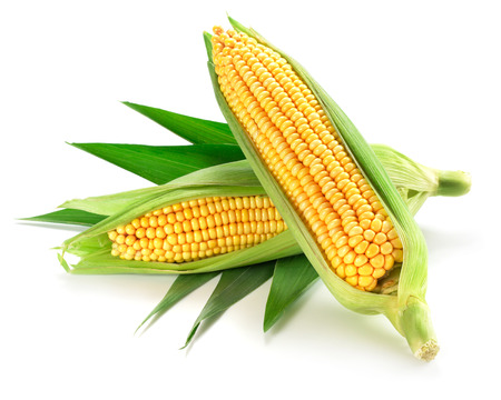 Foto de Corn on the cob kernels close up shot - Imagen libre de derechos