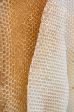 Photo pour Wild bees wax honeycomb texture coseup. Form of irregular wax hexagons inside the beehive. - image libre de droit