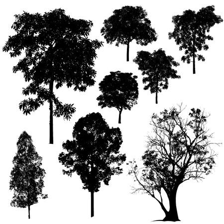 Photo pour Tree Silhouette - image libre de droit