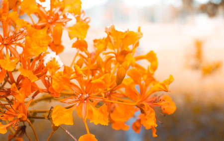Orange flowers are blooming in garden with vintage color tone