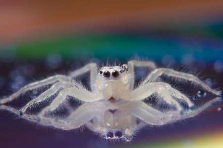 Photo for Macro spider white - Royalty Free Image