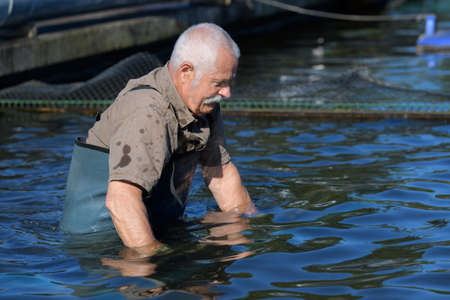 Photo pour Oyster producer waist deep in water - image libre de droit