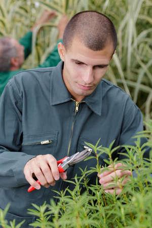 Photo pour male gardener during training - image libre de droit