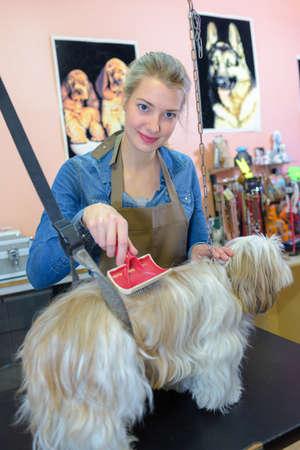 Photo pour Lady brushing dog - image libre de droit