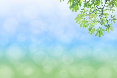 Photo pour natural green background with selective focus - image libre de droit