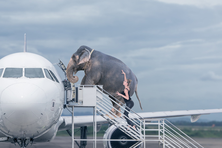 Photo for Woman loading elephant on board of plane. Concept of baggage overweight or travel with domestic pets - Royalty Free Image