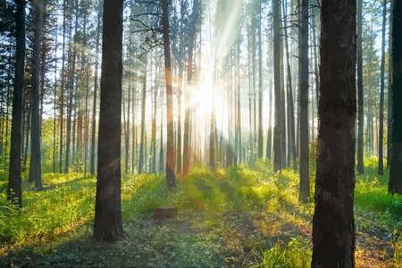 Illustration pour sunset woods - image libre de droit