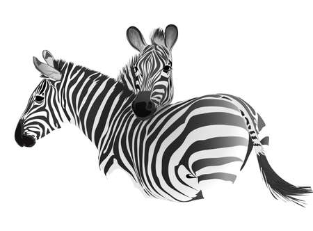 Illustration for Zebras. Vector drawing. Isolated object. - Royalty Free Image