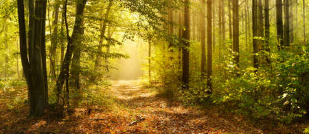 Photo for Footpath through Enchanted Forest in Autumn, Morning Fog illuminated by Sunlight - Royalty Free Image