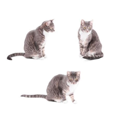 tabby cat in 3 different poses
