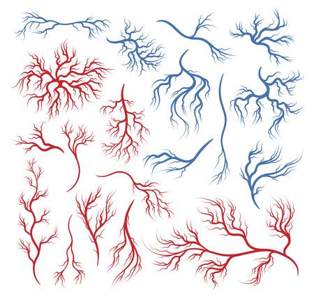 Illustrazione per Human veins and arteries - Immagini Royalty Free