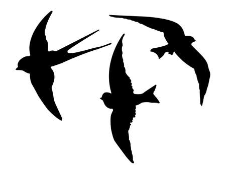 Birds Silhouettes. Vector EPS 10.