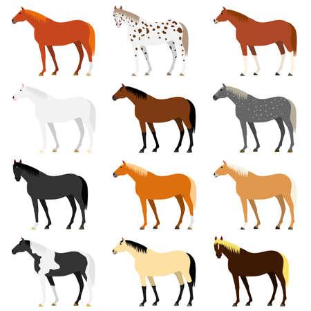 Illustration pour Various horse colors - image libre de droit