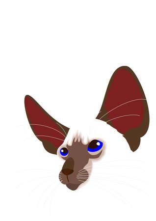 Illustrazione per Siamese cat face vector - Immagini Royalty Free