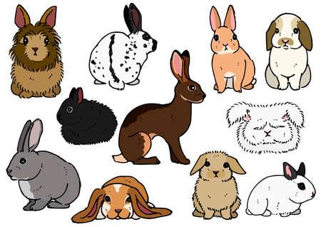 Illustration pour various breeds of rabbits - image libre de droit