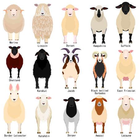Ilustración de sheep chart with breeds name - Imagen libre de derechos