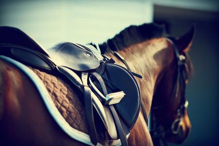Photo pour Saddle with stirrups on a back of a horse - image libre de droit