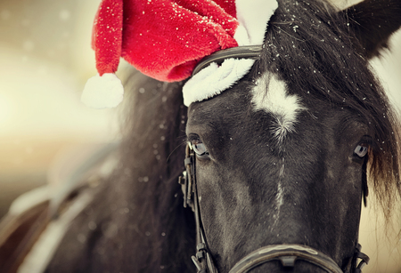 Photo for Portrait of a black horse in a a red Santa Claus hat - Royalty Free Image